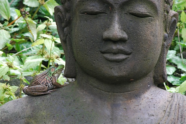 frog on buddha 2